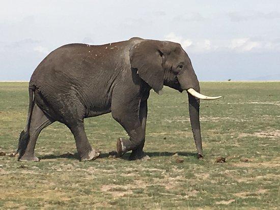 the-majestic-elephant