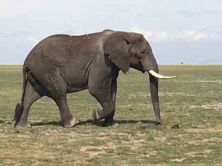 the-majestic-elephant
